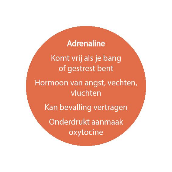 adrenaline-doula
