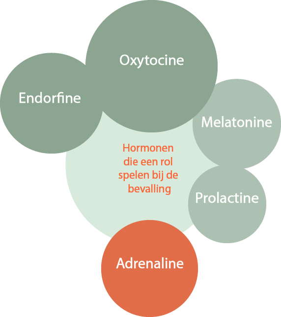 hormonen-bevalling